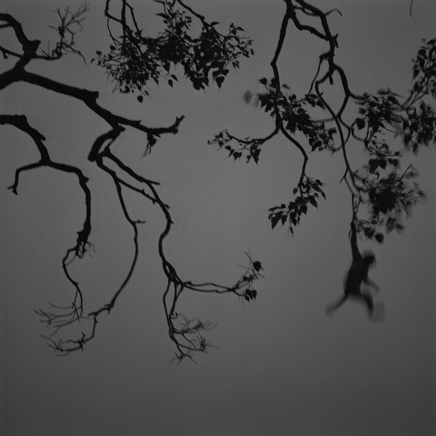 Kenro Izu: Eternal Light, Howard Greenberg Gallery, 2017
