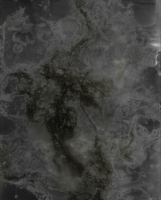 Madison Emond, Decaying Seaweed, Frozen Salt, 2019, Bard x HGG, Howard Greenberg Gallery, 2019