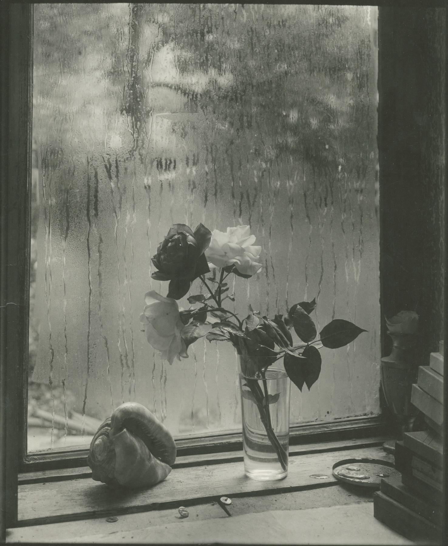 Josef Sudek, Last Rose, 1956, Bard x HGG, Howard Greenberg Gallery, 2019