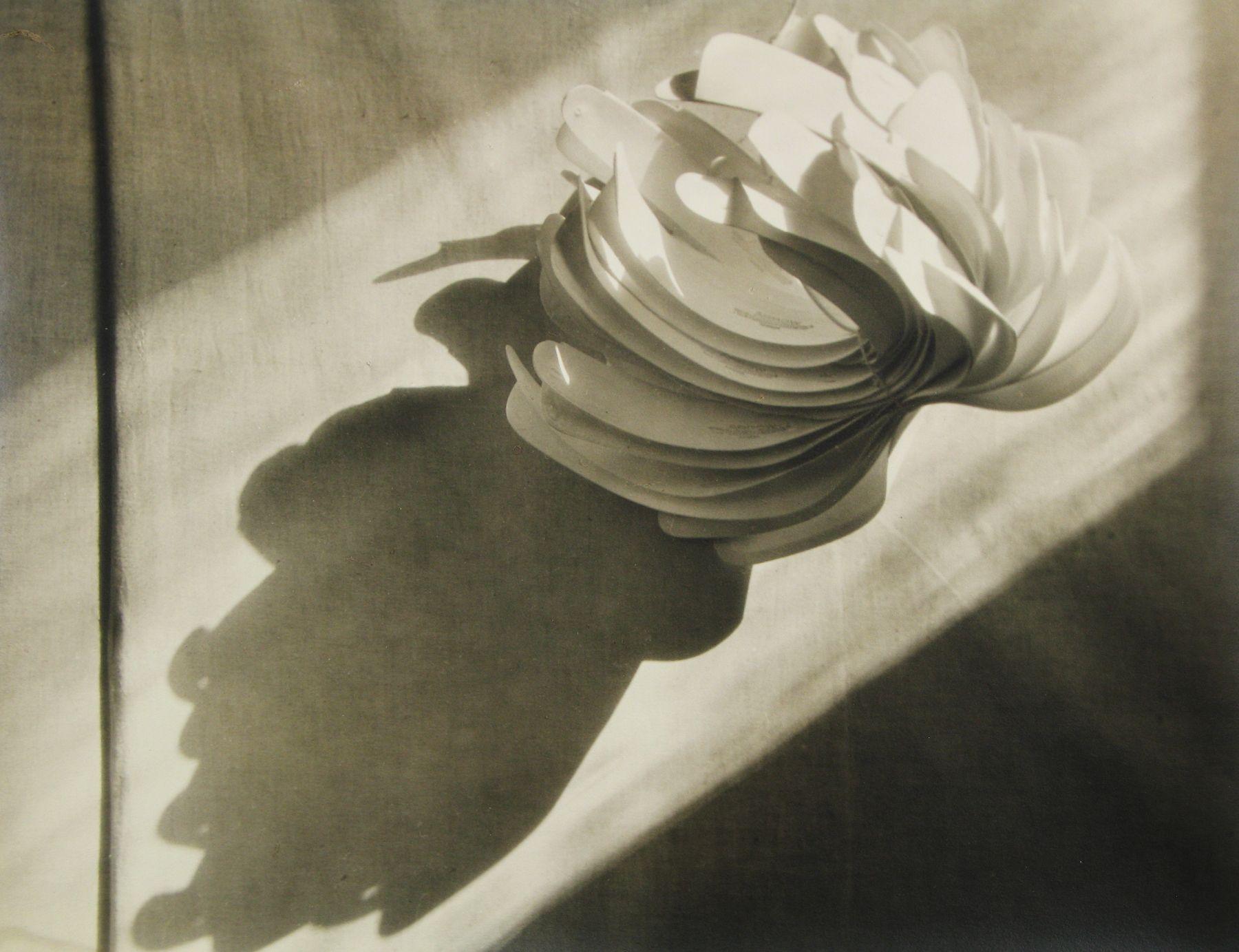 John Vanderpant - Cactus Collaratus (variant), 1931 - Howard Greenberg Gallery