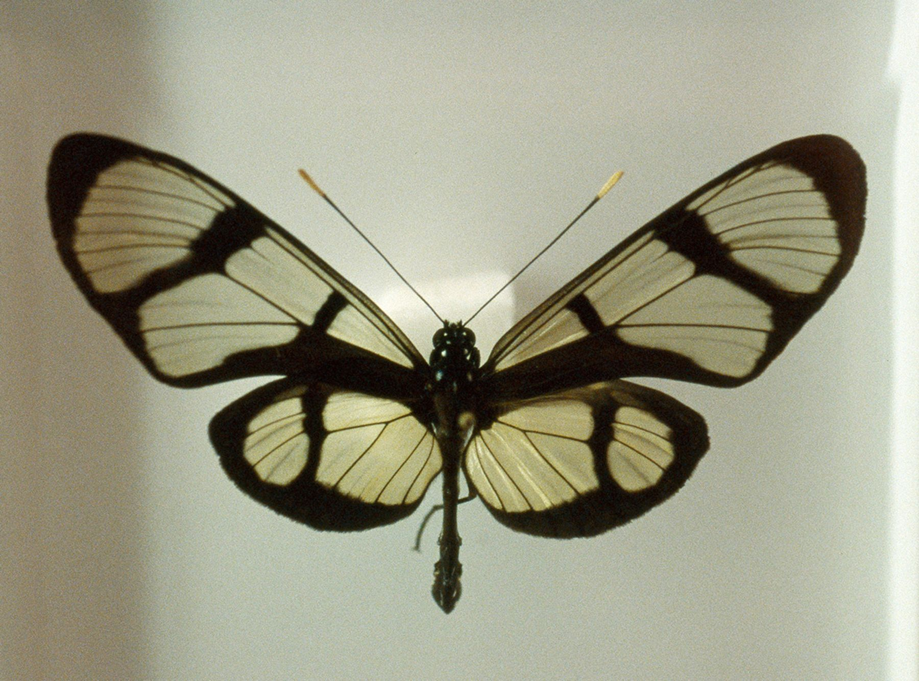 Susanne Wellm, Inner Landscapes, Butterfly, 2012, Sous Les Etoiles Gallery