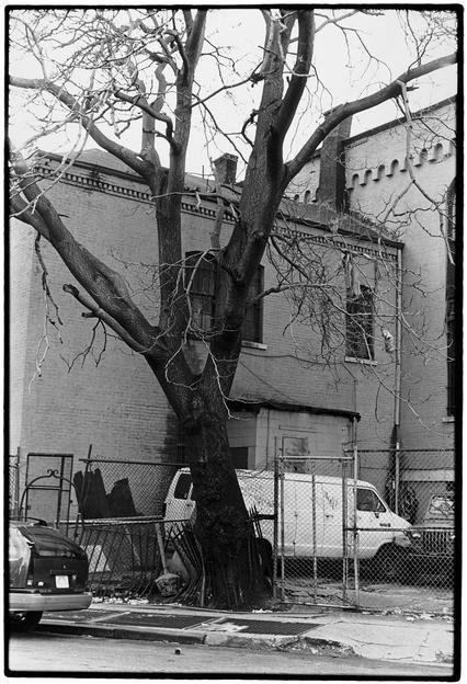 "ALT=""Zoe Leonard, Tree & Fence, 3rd Street, 1998, Gelatin-silver print"""