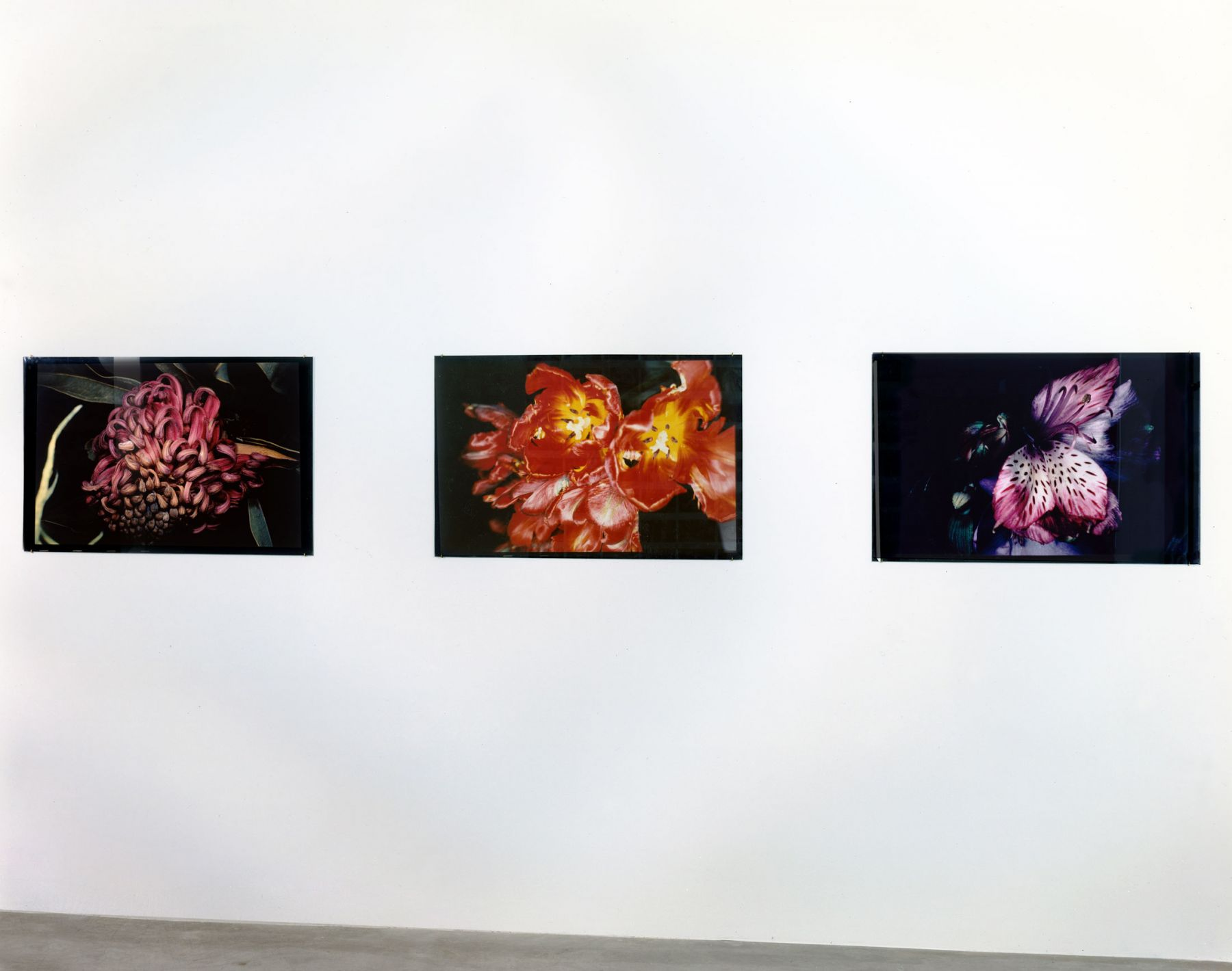 Exposure, Installation view