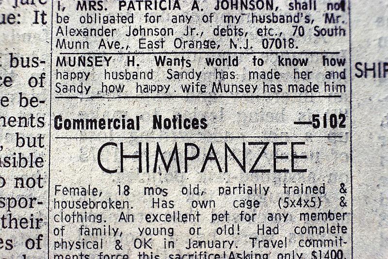 Joel Sternfeld, New York Times classified advertisement, 1970s