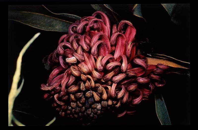 Nobuyoshi Araki Untitled, 1997