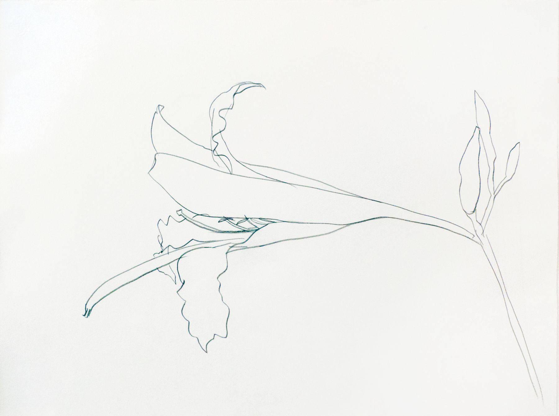 Ellsworth Kelly Easter Lily, 1984