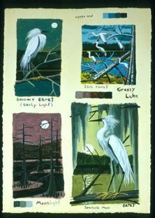 Snowy Egret - Ibis Roost