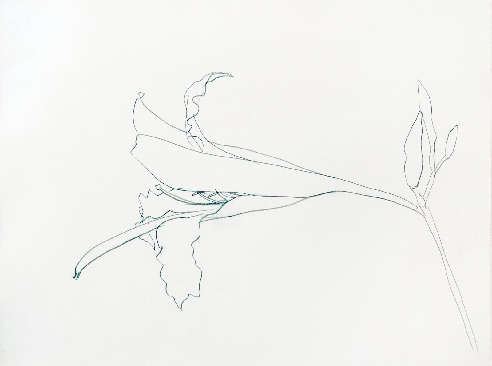 Ellsworth Kelly, Easter Lilly, 1984