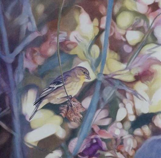 Goldfinch II 2005
