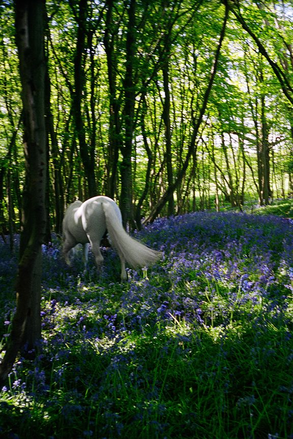 Bluebell Wood, Sussex, 2017