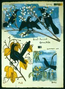 Boat-tailed Grackles 2004