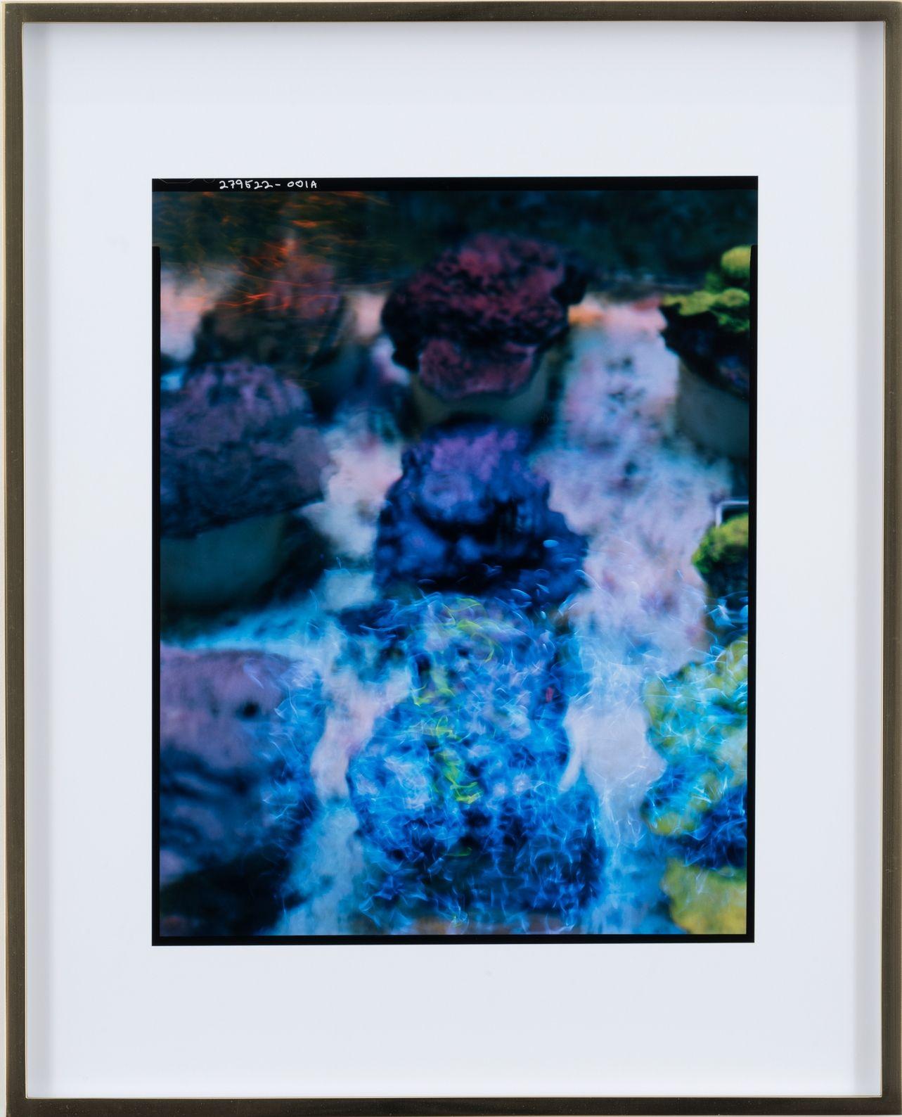 Elad Lassry, Untitled (Corals), 2018