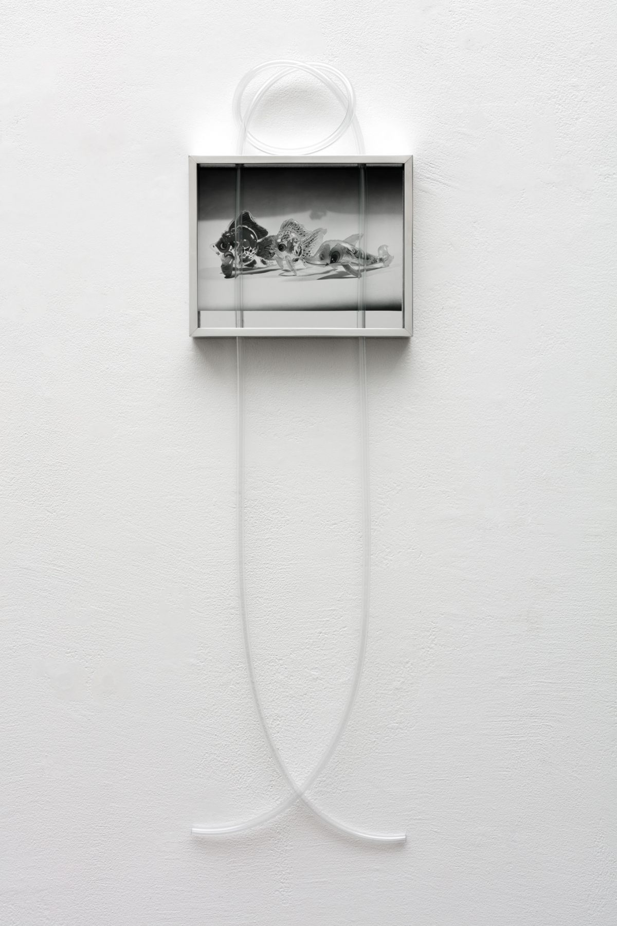 Elad Lassry, Untitled (Inflatable Dolphin, Fish)
