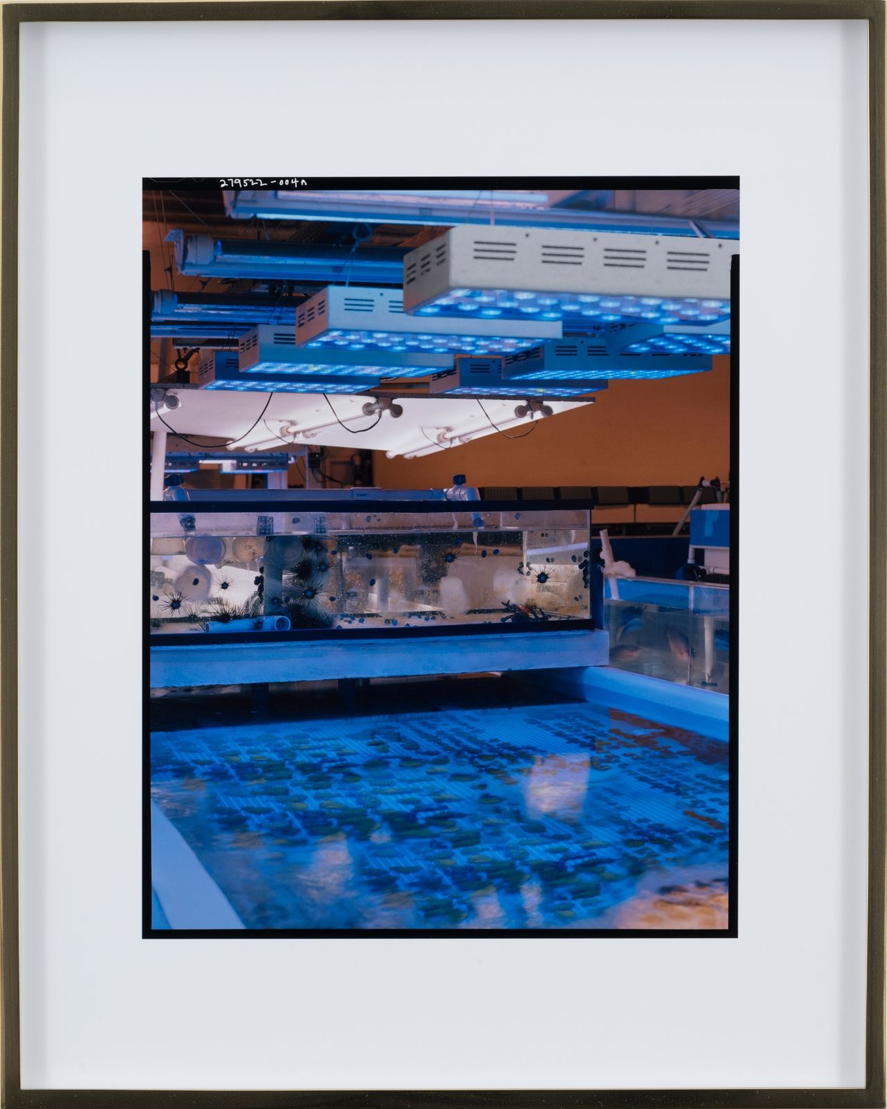 Elad Lassry, Untitled (Facility A), 2018