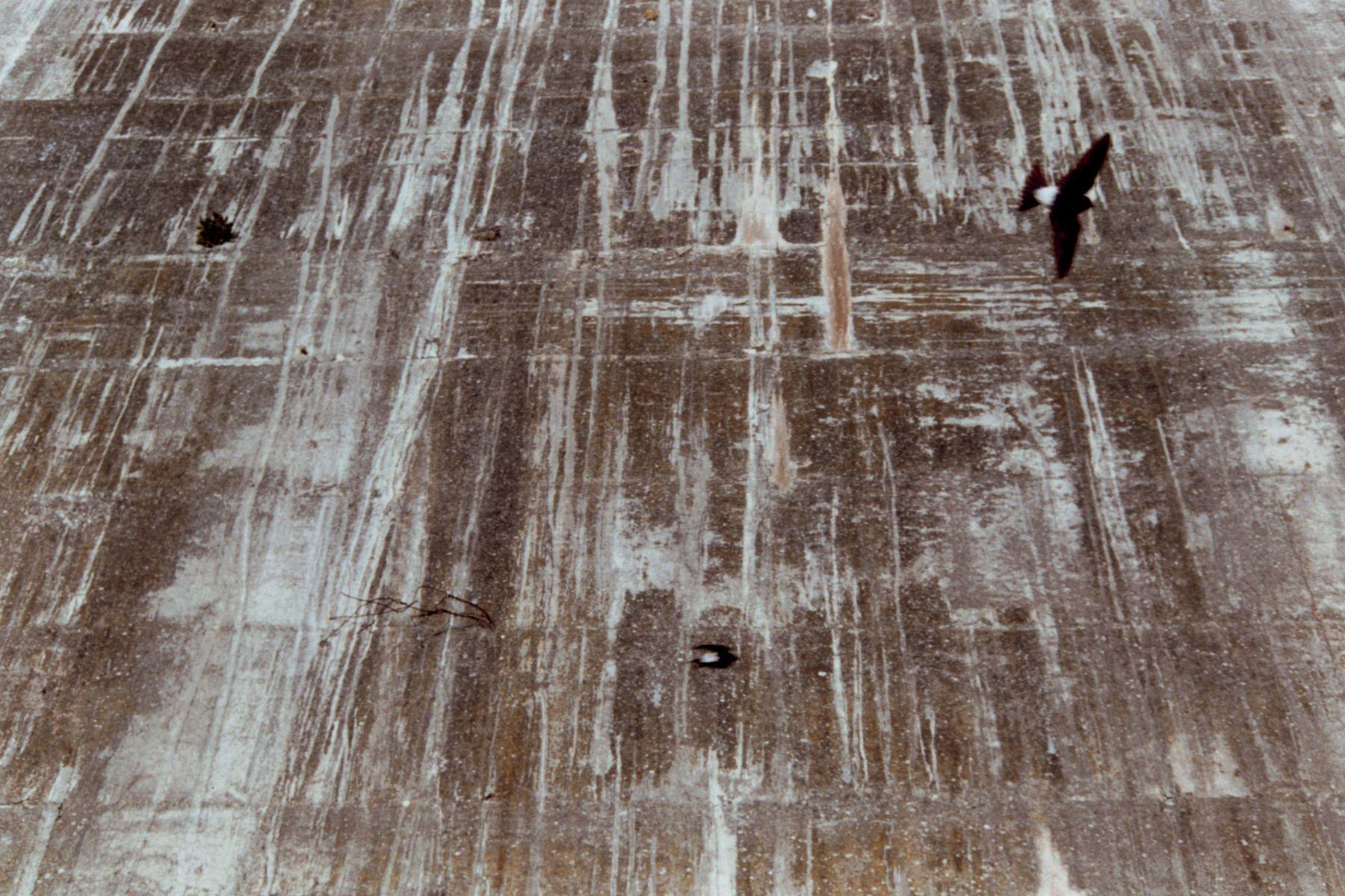 Ein Strauch, Zwei Vögel, 2003