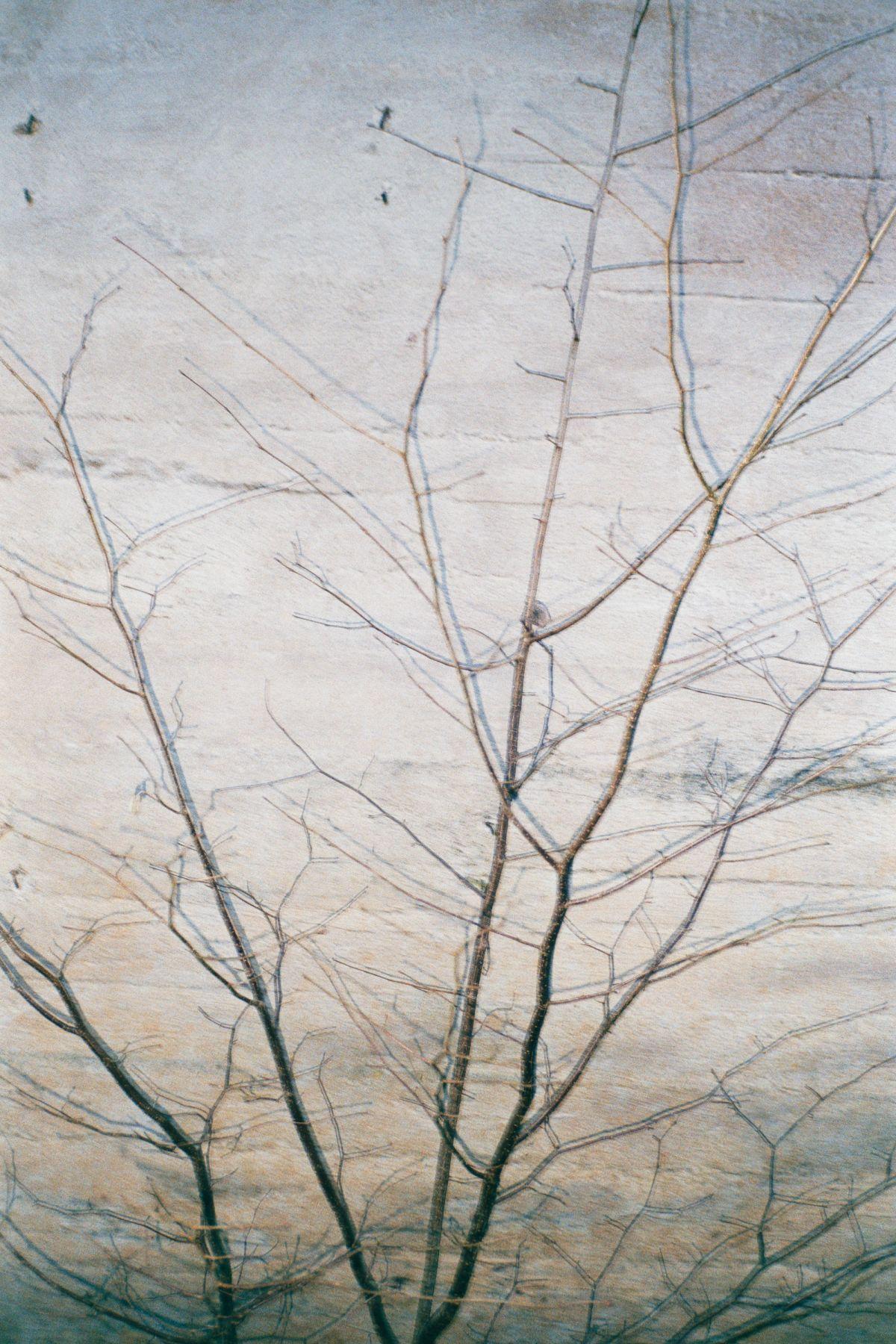 Baum an der Wand, 2016