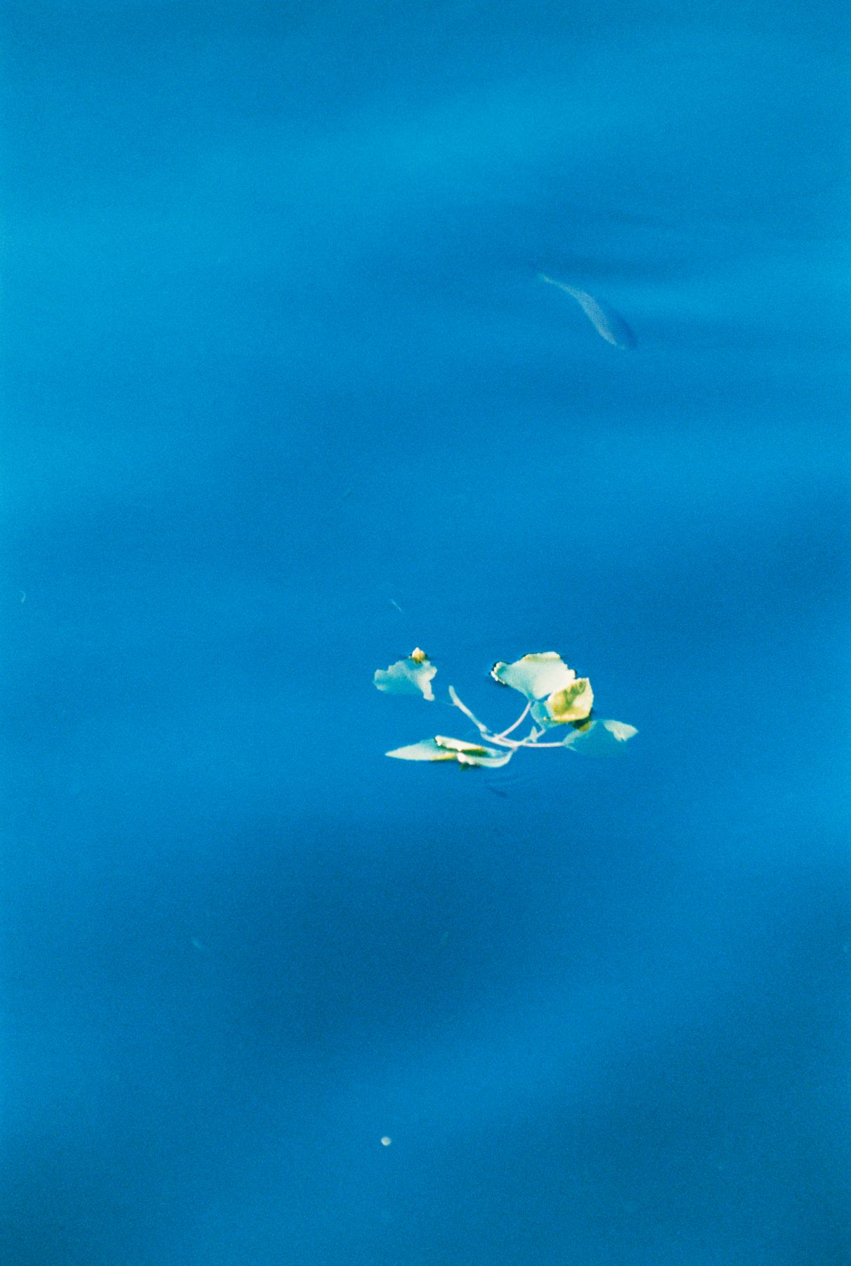 Apollo, Fisch in Blau, 2016