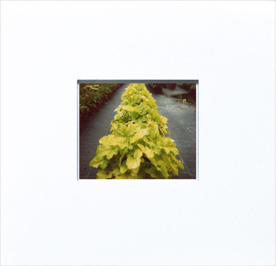 Pflanzen (Plants) 10 08 05, 2005