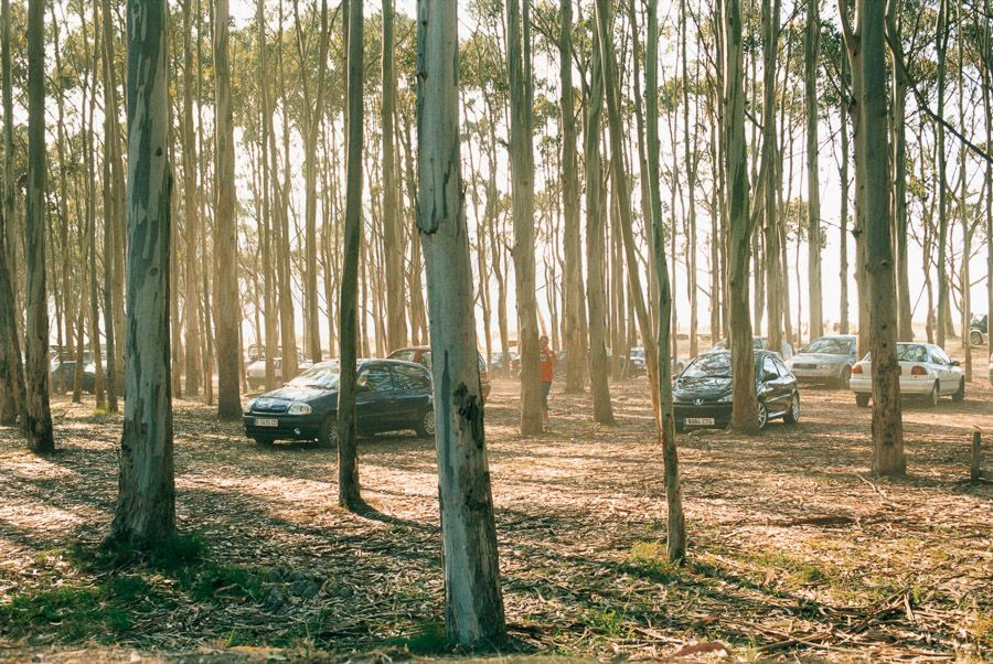 Wald, 2006