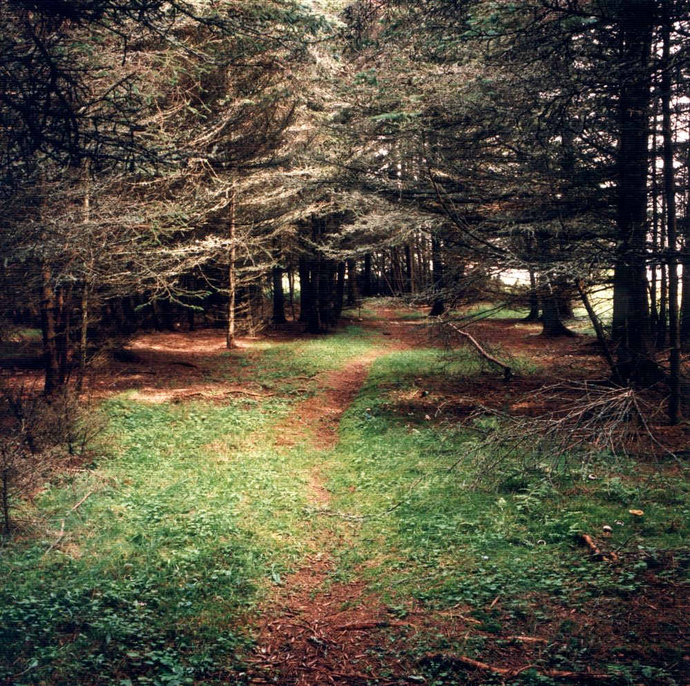 David Graham Path, Placentia Island, ME, 1995-96
