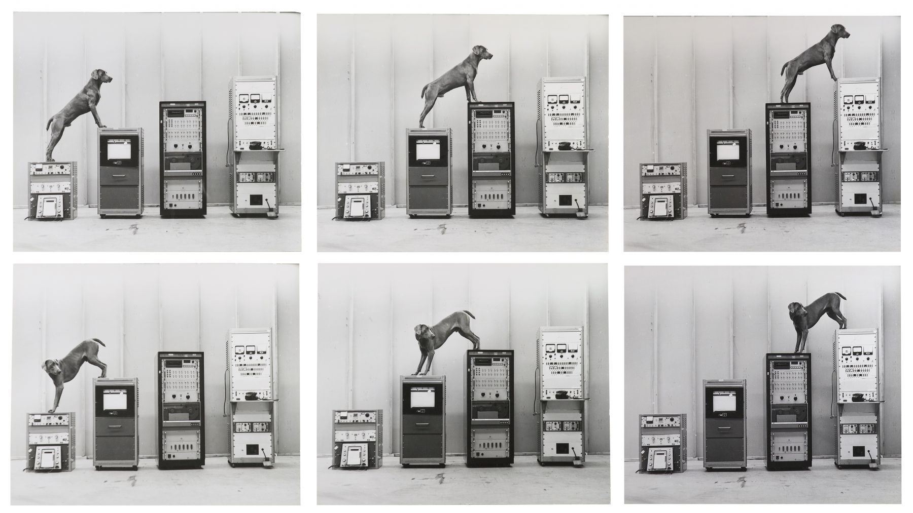 William Wegman,Ray-O-Vac, 1973.