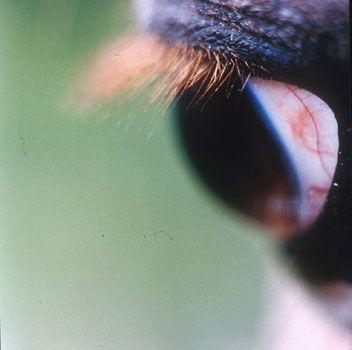 Horse's Eye #12