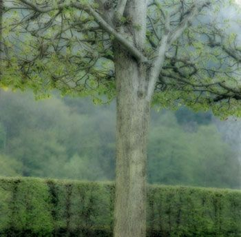 Freyr Gardens, Belgium, 2004 (4-04-32c-12), 19 x 19 and 28 x 28 inch Chromogenic print, Edition of 15 per size