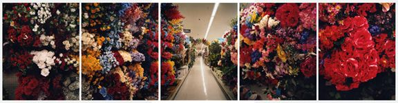 Perennial, 2006. Five-panel archival pigment print, available as24 x 100 or 40 x 150 inches.