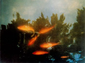 Goldfish From the Water Dreams Series
