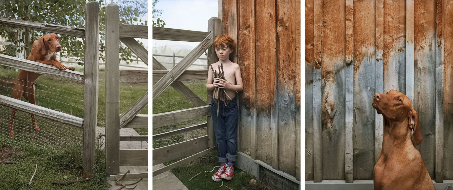 Still with Sticks, 2013. Three-panel archival pigment print, available as24 x 60 or 40 x 90 inches.