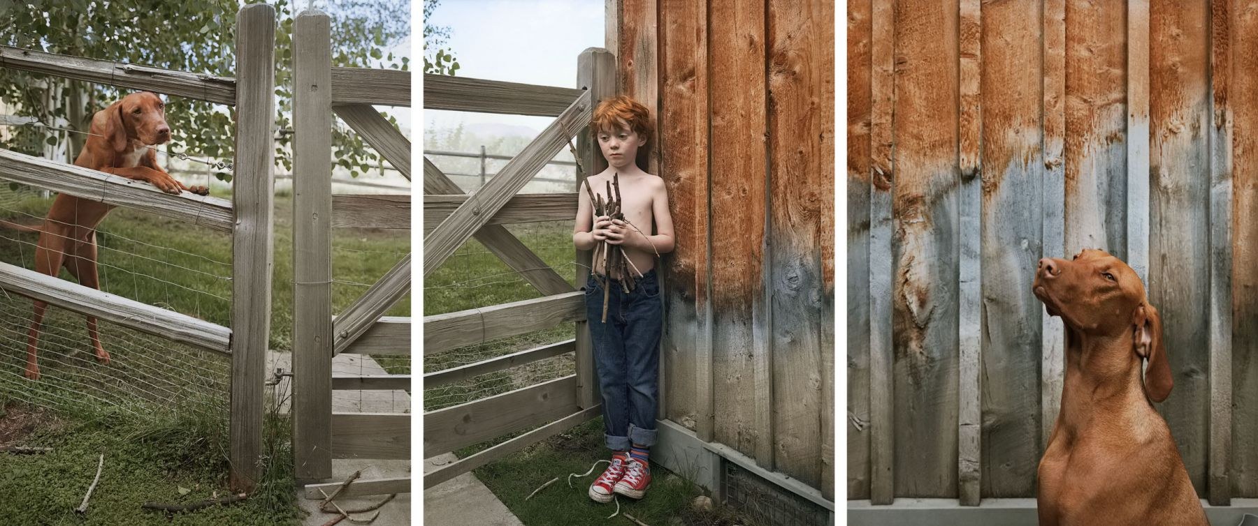 Still with Sticks, 2013. Three-panel archival pigment print, available as 24 x 60 or 40 x 90 inches.
