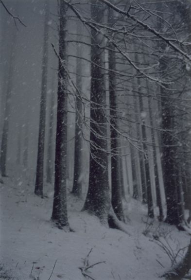 Forest #2, Untitled (Snow Storm), 2000, 16 x 12 inch chromogenic print