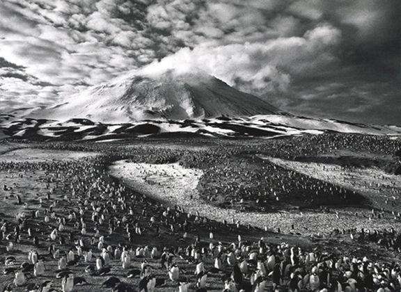 Macaroni Penguins, Sandwich Islands, Antarctica, from the series Genesis, 2009. 16 x 20, 20 x 24, 24 x 35, 36 x 50 or 50 x 68 inch gelatin silver print