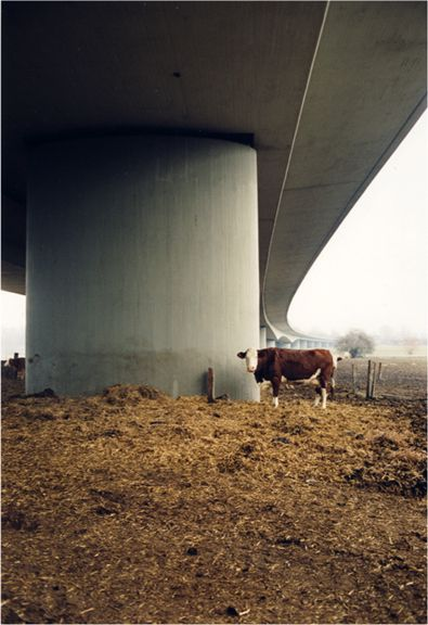 Untitled (Bio Cow), from the series Here, 1998, 12 x 8 inch chromogenic print