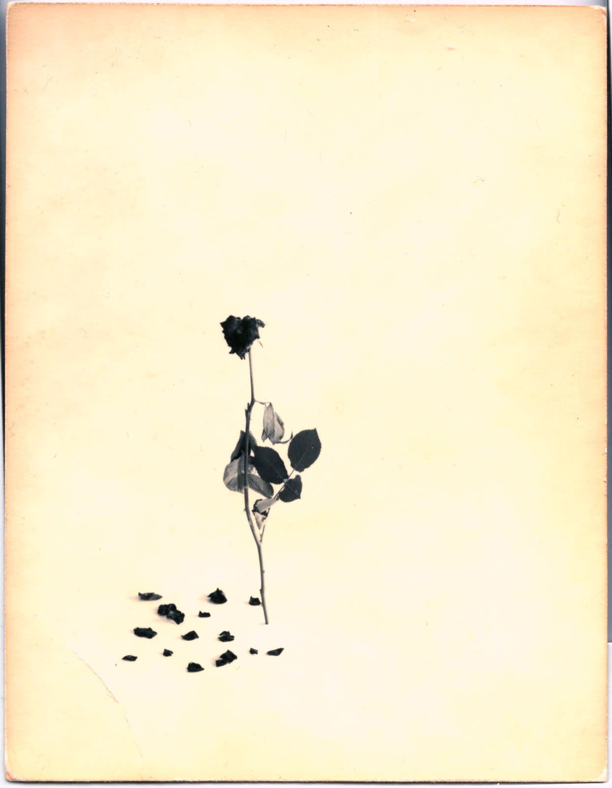 Masao Yamamoto,Untitled #44from the seriesA Box of Ku. Hand-toned gelatin silver print with paint,, 5 1/4 x 4 1/4 inches.