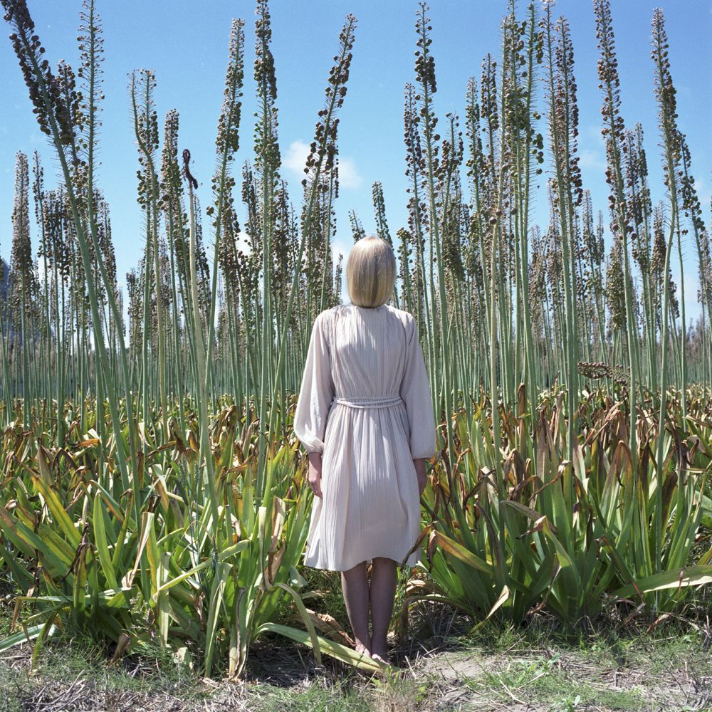 Untitled #444, 2014, 28 x 28 inch chromogenic print, edition of 10