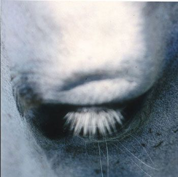 Untitled #13 from the Horse's Eyes Series, 1999
