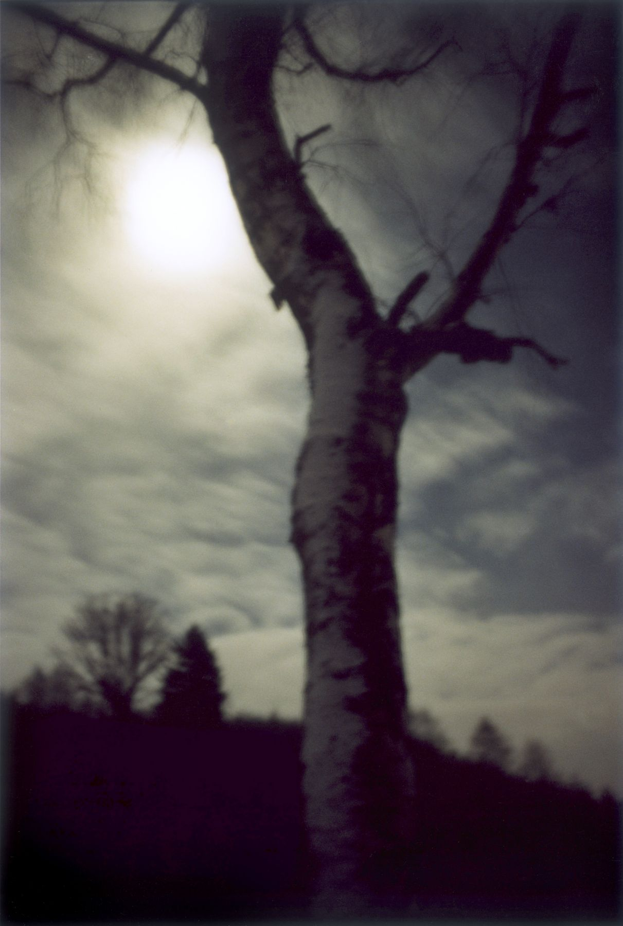 Forest #1, Untitled (Moon Shine), 2000, 10.5 x 7 inch chromogenic print