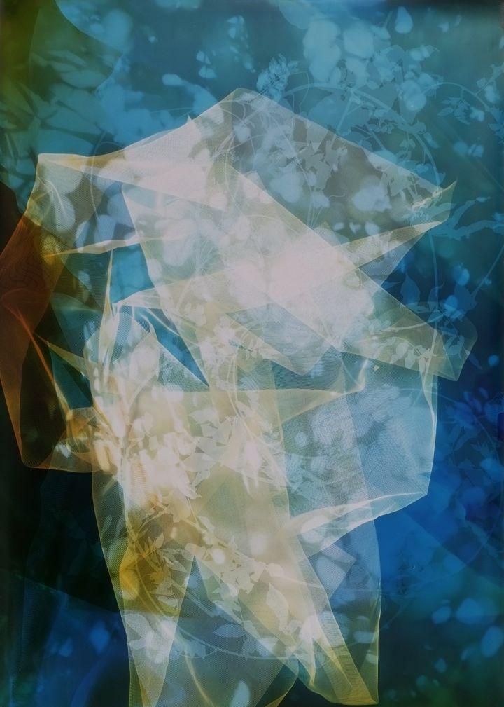 Sun Room Canopy Debris II,2016, 56 x 40inch unique chromogenic print