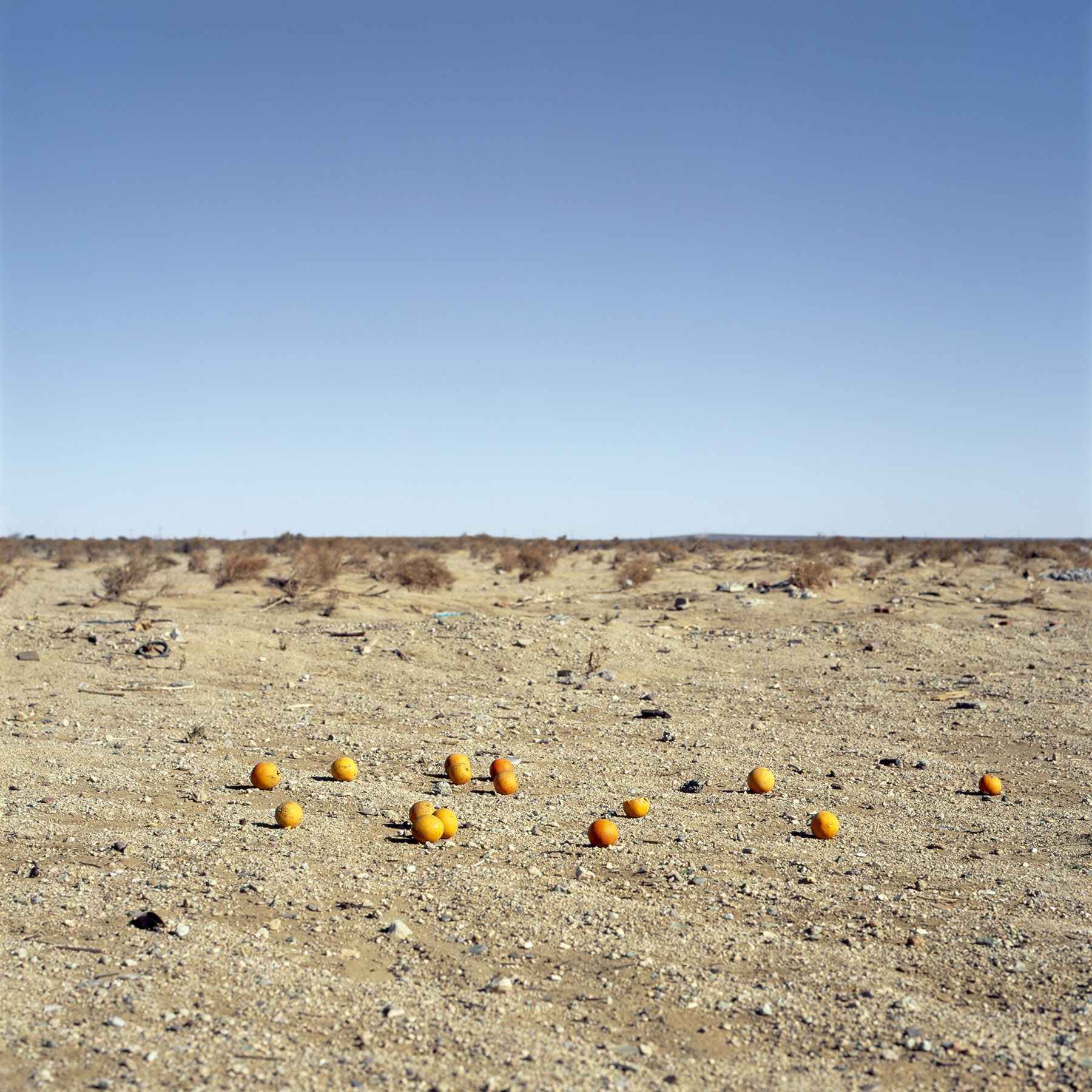 Discarded #9, 2012. Archival pigment print. Image dimensions 40 x 40 inches, frame dimensions 47 x 47 inches.