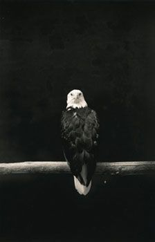 Untitled #1515 (from Kawa = Flow), 2007, 8 x 5.5 inch Gelatin Silver Print, Signed, titled, dated, editioned and stamped on verso, Edition of 20