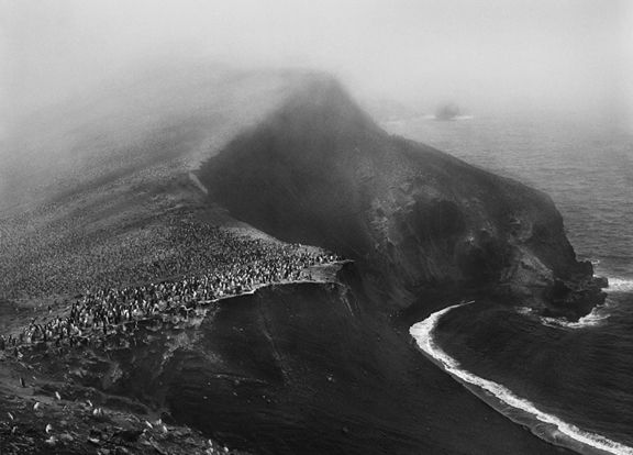 Colony of Chinstrap Penguins, Bailey Head, Deception Island, Antartica, from the series Genesis, 2005. 16 x 20, 20 x 24, 24 x 35, 36 x 50 or 50 x 68 inch gelatin silver print