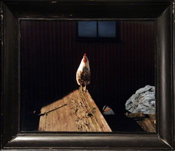 Rooster, 23.23 x 26.77 inch Chromogenic Print, edition of 20