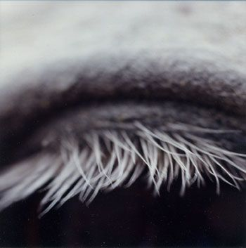 Susan Unterberg, Untitled #5 from the Horse's Eyes Series, 1998, 4 x 4 inch chromogenic print on Fujiflex paper, Signed on verso, Edition of 8