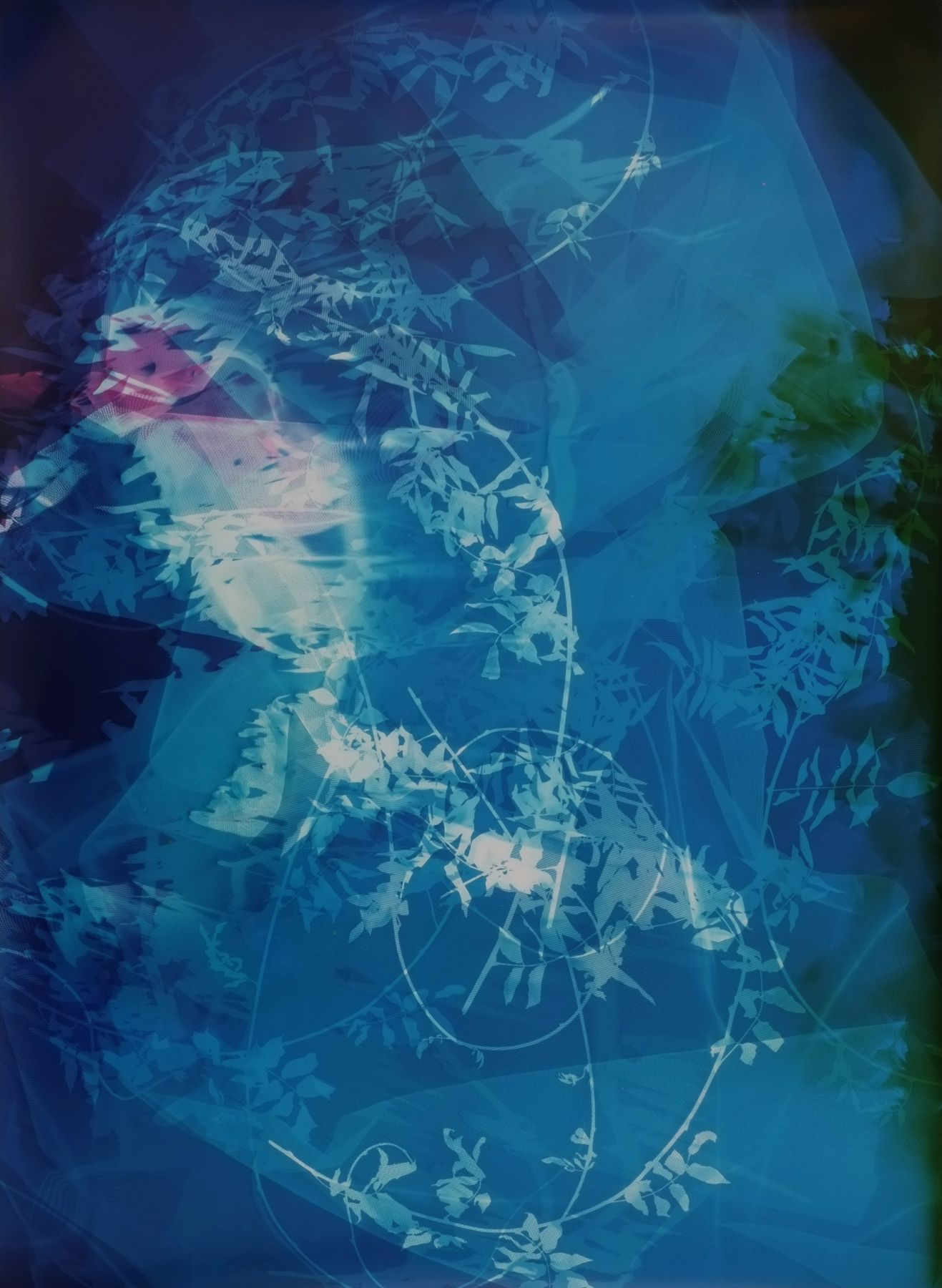 Field Recording (Sun Room II), 2016, 54 x 40 inchunique chromogenic print