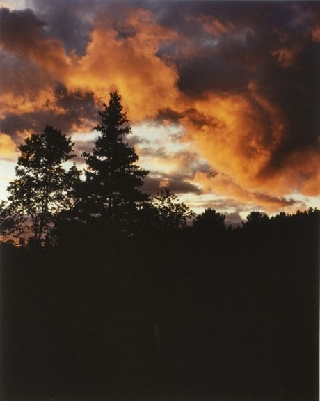 Field at Dusk #1, from the series Wildlife Analysis, 2008, 20 x 16 or 24 x 20 inch chromogenic print