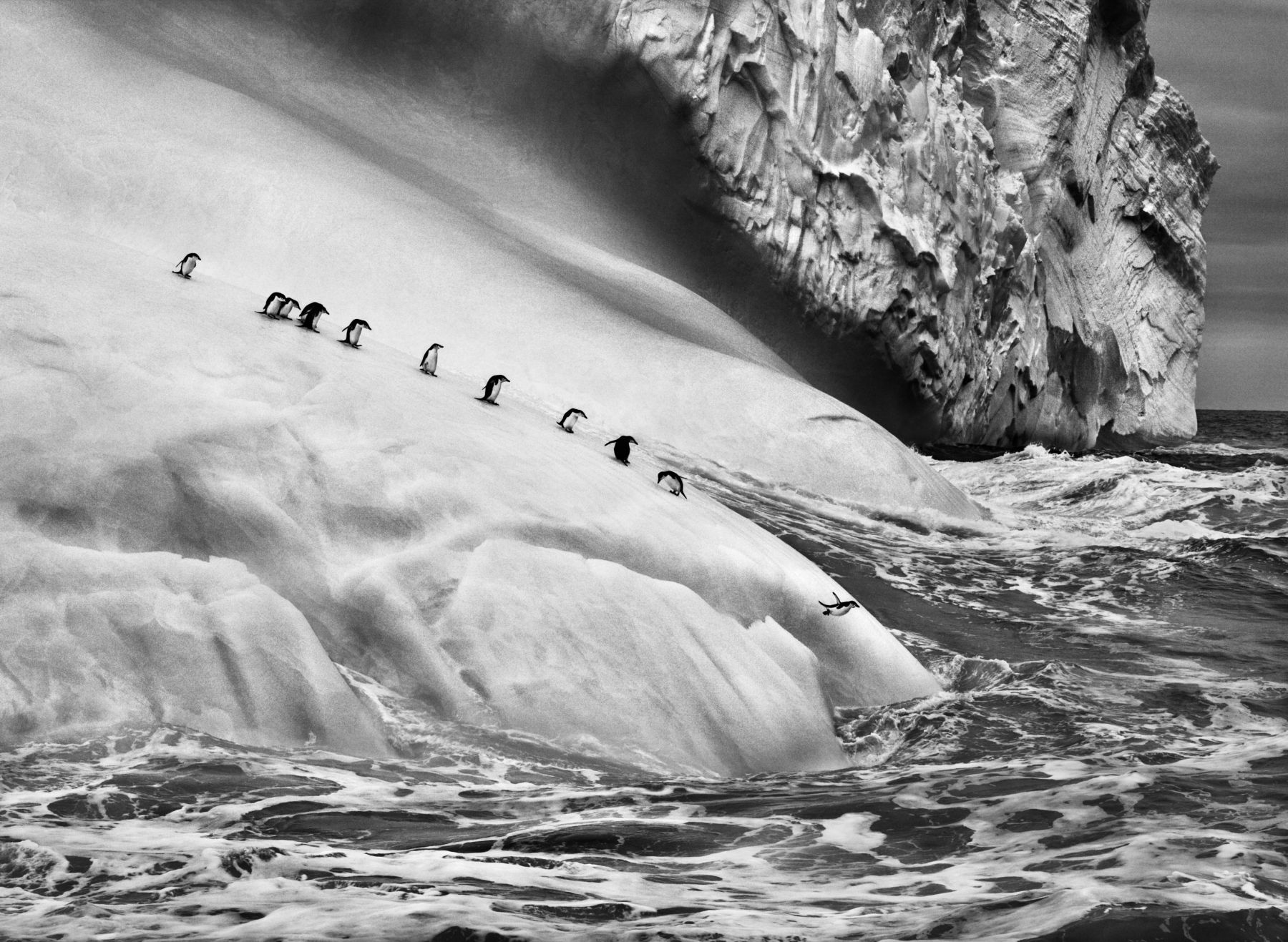 Chinstrap penguins on icebergs between Zavodovski and Visokoi islands, South Sandwich Islands, from the series Genesis, 2009. 16 x 20, 20 x 24, 24 x 35, 36 x 50 or 50 x 68 inch gelatin silver print