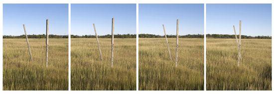 Walking Sticks, four panels, 25 x 19 inch each, chromogenic print
