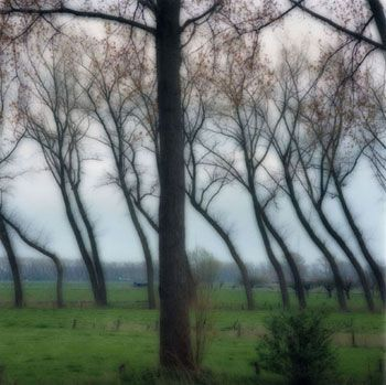 Damme, Belgium, 2004 (4-04-8c-11), 19 x 19 and 28 x 28 inch Chromogenic print, Edition of 15 per size