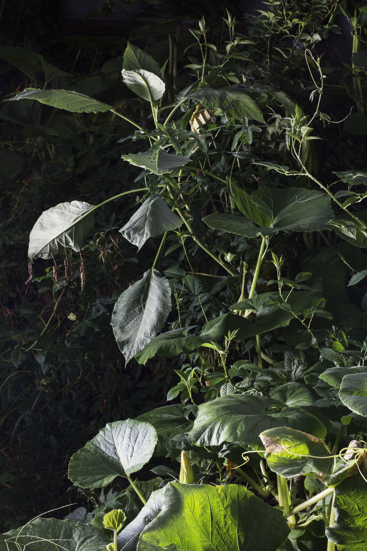 Photograph by Sharon Core from the series Understory of a close-up garden scene with leaves, flowers, and plants.